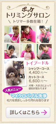 子犬販売ポッケスタッフブログ