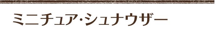 ミニチュアシュナウザー 男の子  (コンナル×花音) 次男