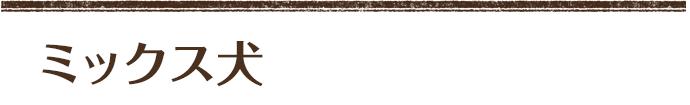ミックス犬 <トイプードル (エース)× マルチーズ(泡雪)> 次男