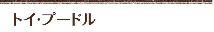 トイプードル ホワイト (レイチェルママ×ライトパパ) 長男