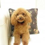 父犬エース1.8kg