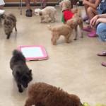 犬の社会化 トレーニング パピーパーティー