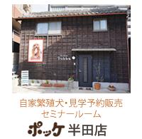 子犬販売ポッケ半田店