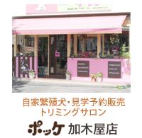 子犬販売ポッケ加木屋店