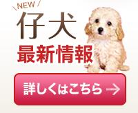 仔犬最新情報 赤ちゃん