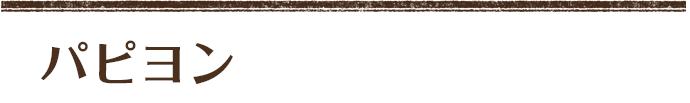 パピヨン ホワイト&ブラウン (サリーママ×ホルスパパ)長女