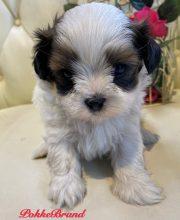 ミックス犬 マルシー 女の子