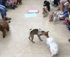 パピーパーティー 子犬 しつけのトレーニング