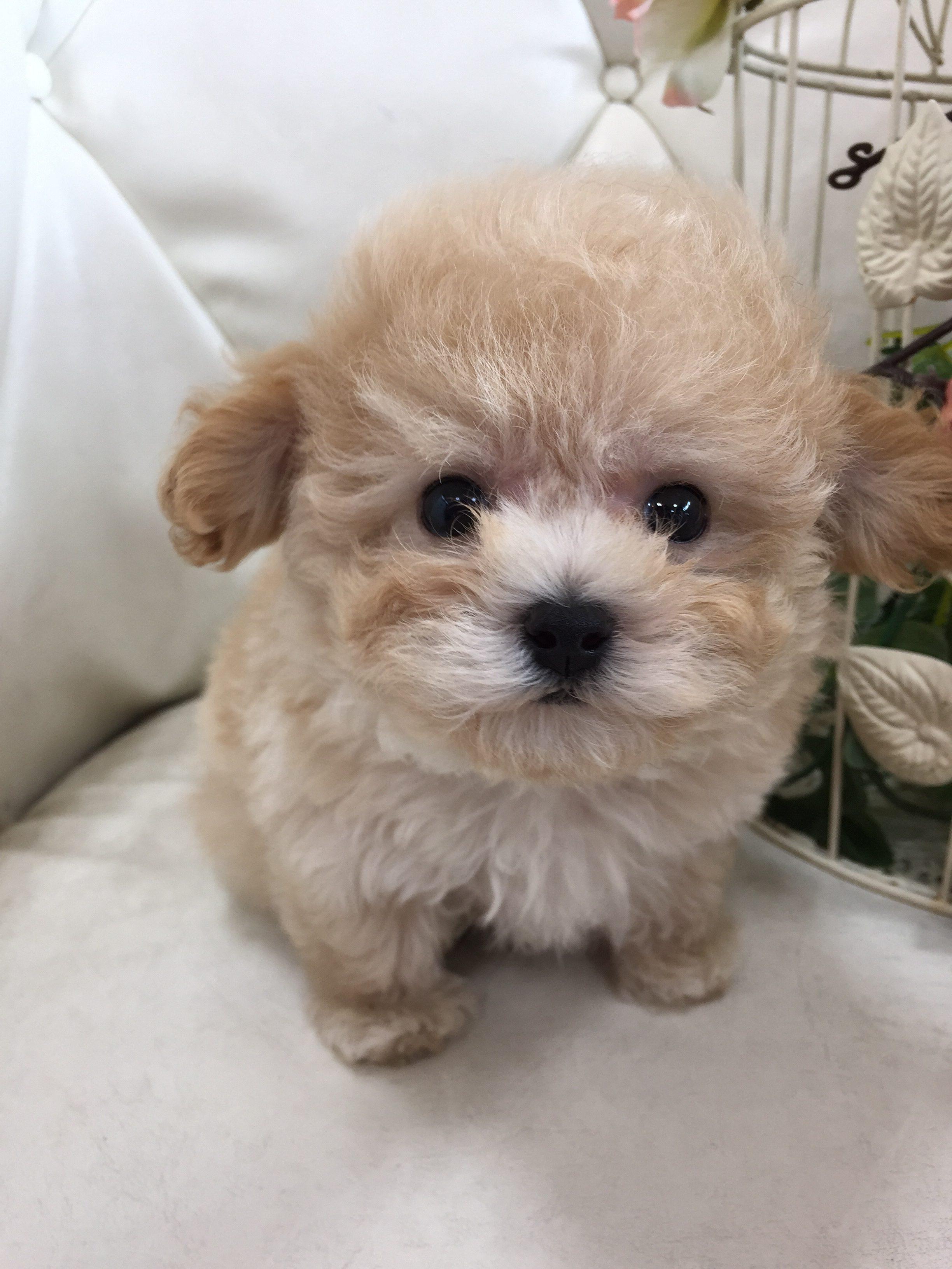 ミックス犬 男の子 小ぶりサイズ